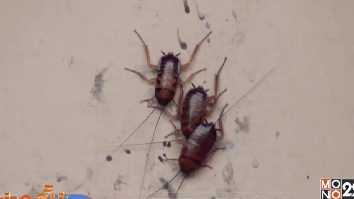 แมลงสาปเกาะกำแพงร้านอาหารพนัสนิคม