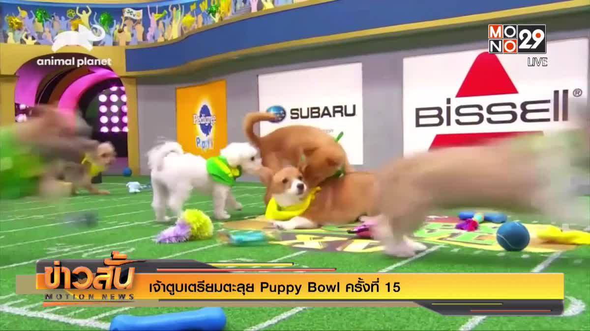 เจ้าตูบเตรียมตะลุย Puppy Bowl ครั้งที่ 15