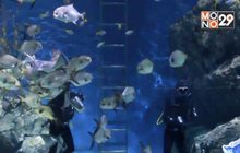SEA LIFE Bangkok ยันยังดูแลสัตว์น้ำอย่างดี แม้ปิดอควาเรียม