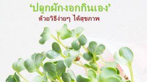 แจกวิธี ปลูกผักงอก กินเอง ปลอดภัยได้สุขภาพ และห่างไกลจากโรคไม่ติดต่อเรื้อรัง