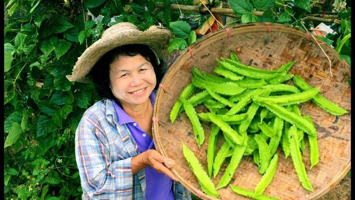 วิธีปลูกถั่วพู / How to grow Winged Bean / 如何种植四棱豆