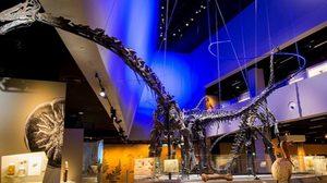 ทึ่ง! ซากฟอสซิลสมบูรณ์ขนาดใหญ่ ที่พิพิธภัณฑ์ธรรมชาติวิทยา