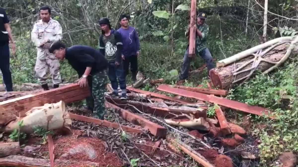 บุกจับ! ขบวนการลอบตัดไม้ในป่าต้นน้ำ ส่งทำเสาบ้าน-เฟอร์นิเจอร์
