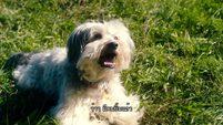 ซีรี่ส์เกาหลี Pudsey the Dog [ พัดซี่ ยอดสุนัขแสนรู้ ] Part 2