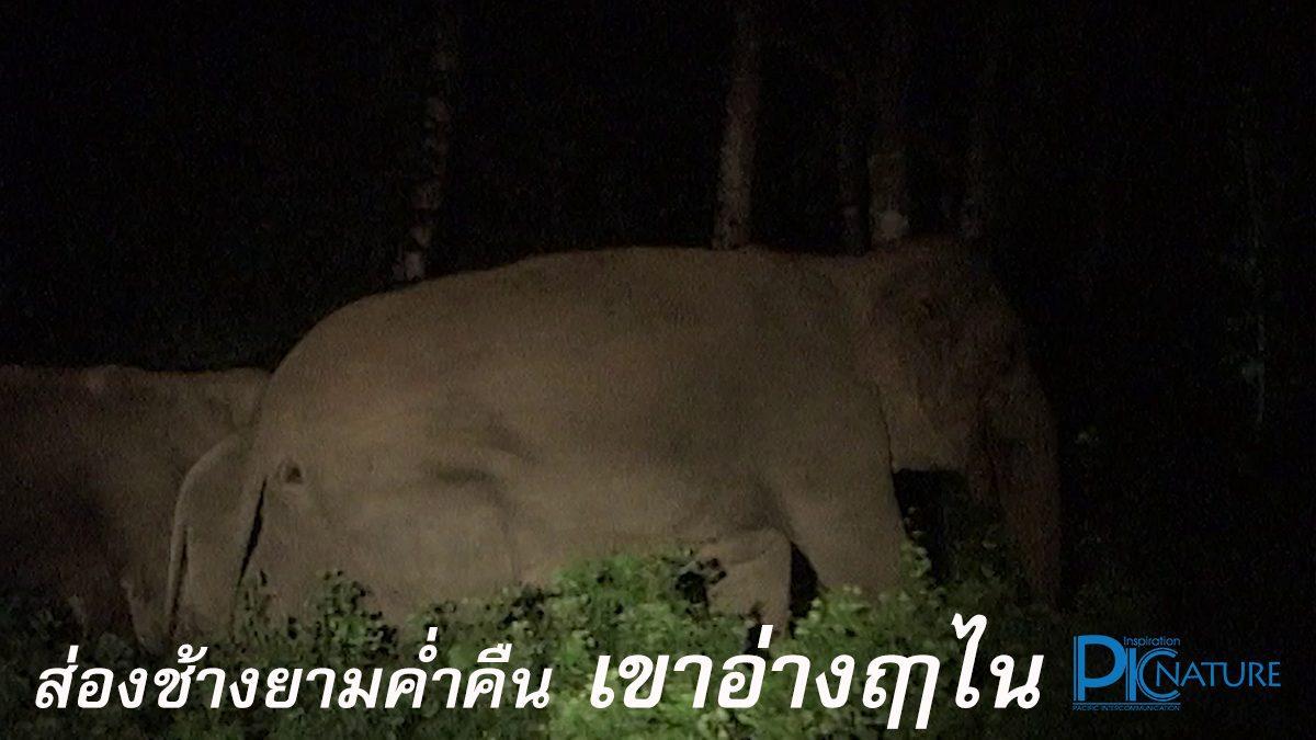 ชมช้างป่ายามค่ำคืน เขาอ่างฤาไน