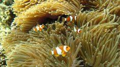 ทะเลใสๆ ปะการังน้ำตื้นสวยๆ ที่หมู่เกาะอาดัง-ราวี อุทยานแห่งชาติตะรุเตา
