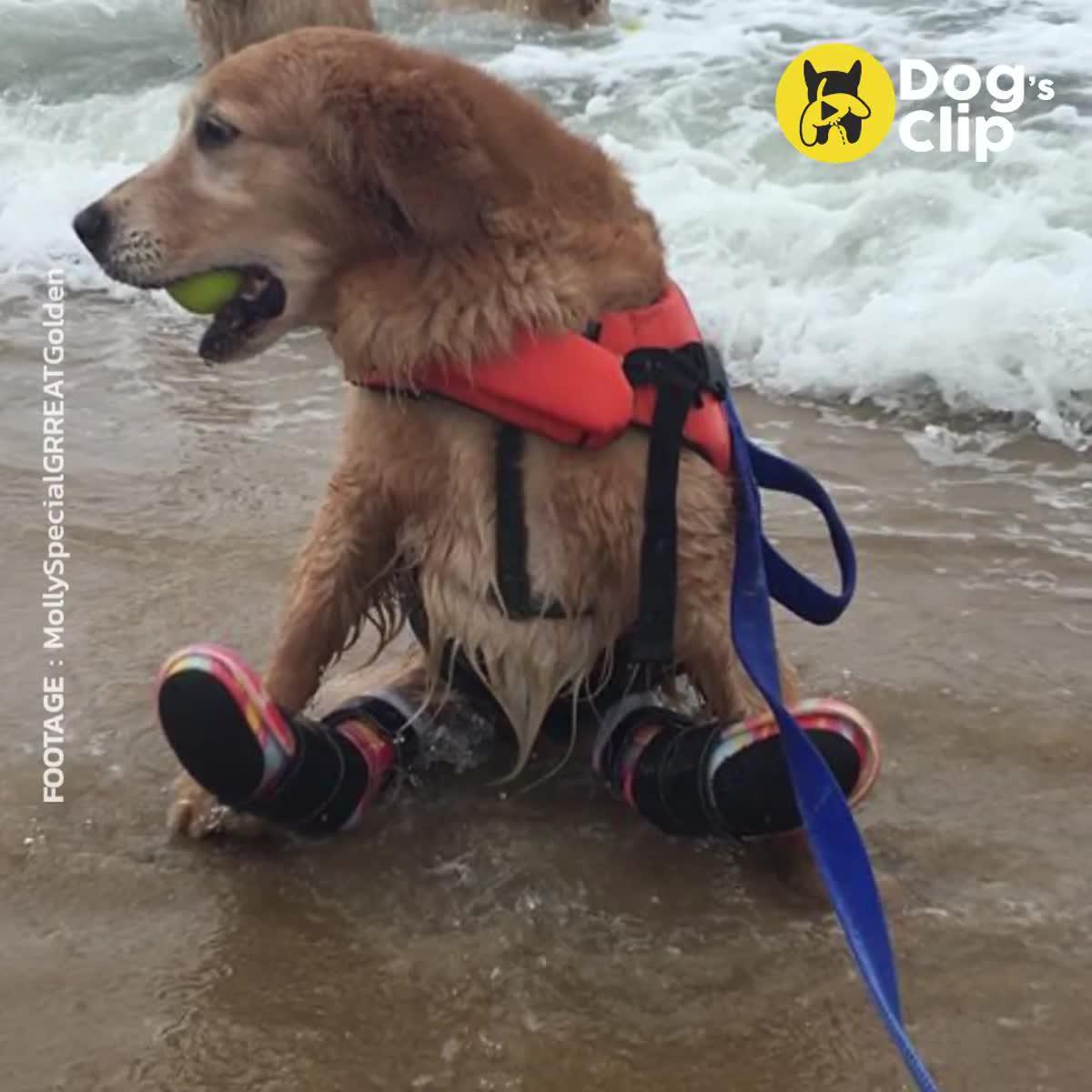 มอลลี่ น้องหมาที่เกิดมาพร้อมขาหลังที่พิการ แต่ได้รับการดูแลอย่างดีจากครอบครัวที่อบอุ่น