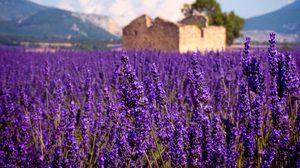 โพรวองซ์ ดินแดนแห่งลาเวนเดอร์ Provence เที่ยวฝรั่งเศสตอนใต้