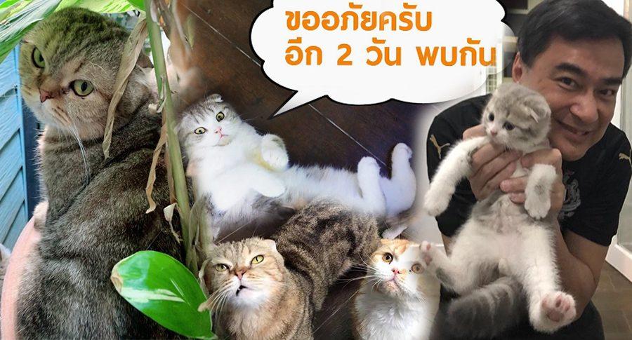 นักการเมืองสู่นักการแมว!! อภิสิทธิ์ เวชชาชีวะ ไลน์ล่ม เหตุคนขอดูแมว