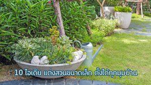 10 ไอเดียสวนถาด แต่งสวนขนาดเล็ก จากกระถางต้นไม้ ตั้งได้ทุกมุมบ้าน