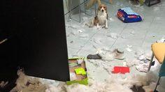 เจ้าของโพสต์สุดเซ็ง หมาแสนรักทำบ้านพังเละ