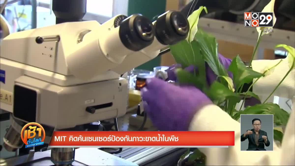 MIT คิดค้นเซนเซอร์ป้องกันภาวะขาดน้ำในพืช
