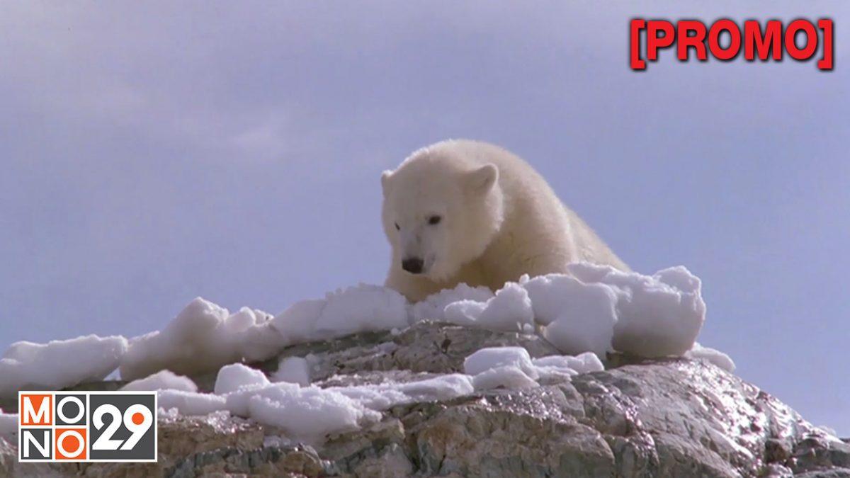 Alaska อลาสก้า หมีน้อย...หัวใจมหึมา [PROMO]