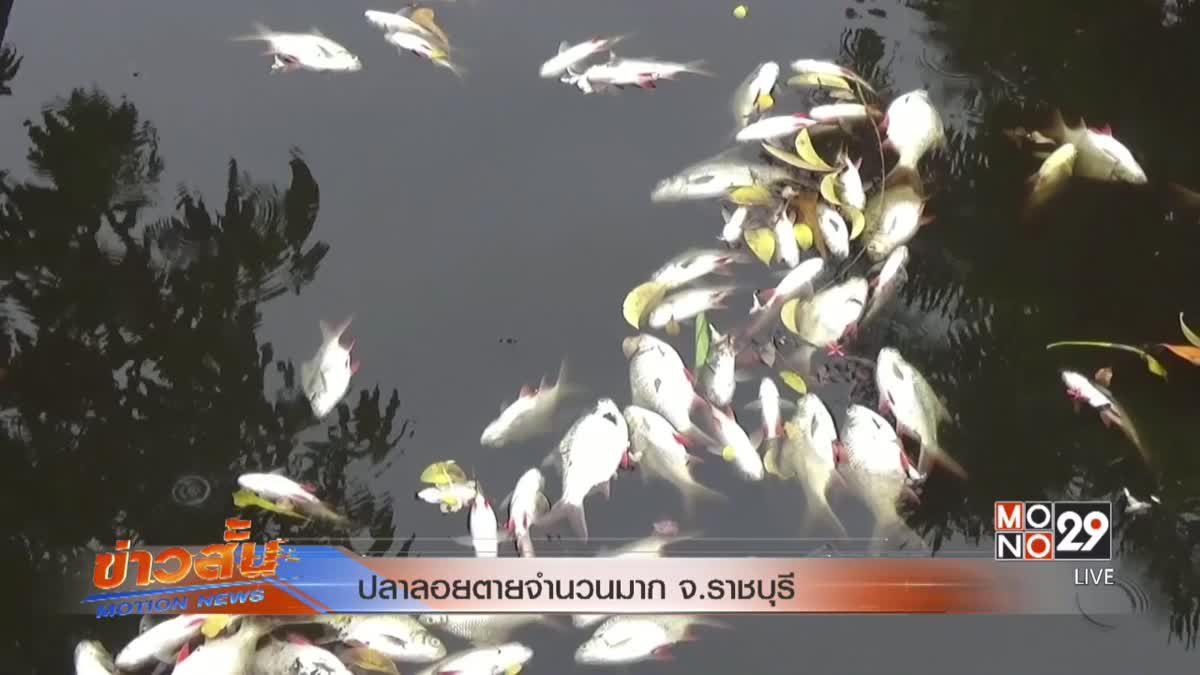 ปลาลอยตายจำนวนมาก จ.ราชบุรี