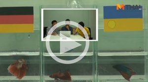 ซี้ซั้วฟันธง! ปลากัดทายผล ยูโร 2016 เยอรมัน ปะทะ ยูเครน (12 มิ.ย.)
