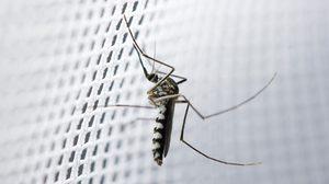 หมดปัญหากวนใจด้วย 4 วิธีง่ายๆช่วย ป้องกันแมลง เข้าบ้าน