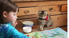 ซึ้งมาก! ความรักของแมวน้อย กับ เด็กหญิง ออทิสติก