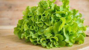 8 ประโยชน์และสรรพคุณของ กรีนโอ๊ค สลัดผักที่ทุกคนไม่ควรมองข้าม!!