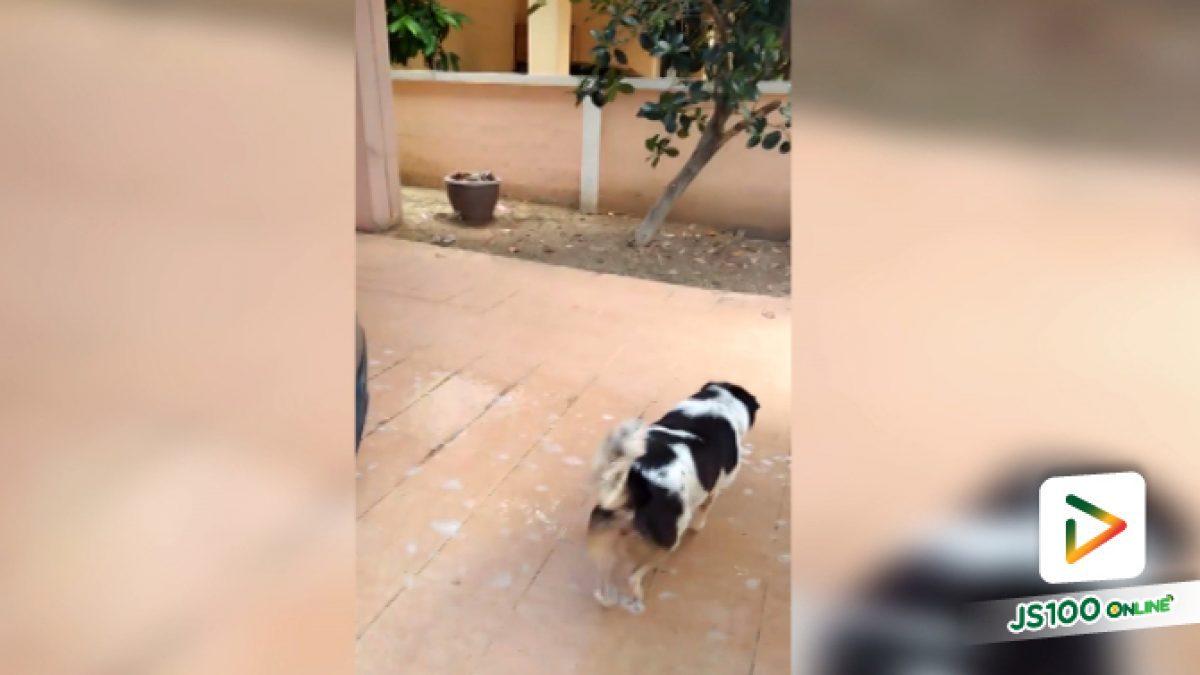 คลิปเมื่อน้องหมาไม่ชอบอาบน้ำก็จะเนียนวิ่งแบบนี้ (15-05-61)