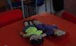 ตุ๊กตาต่อต้านการคุกคามทางเพศในปารากวัย
