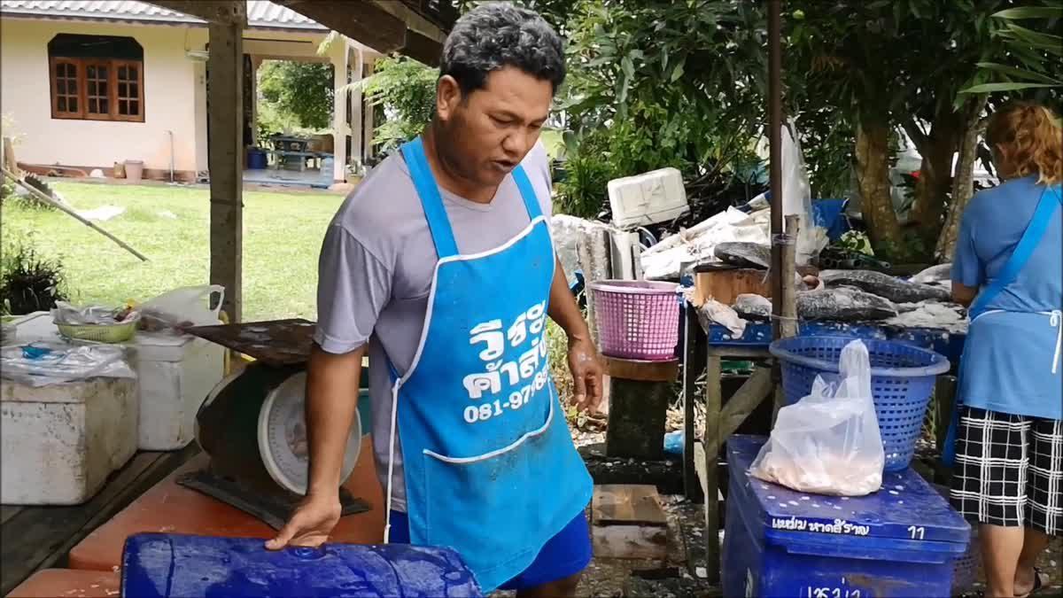 พ่อค้าแล่เนื้อปลากะพงส่งขายลูกค้า สร้างรายได้กว่า 3 หมื่นบาทต่อเดือน