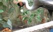 สวนสัตว์เชียงใหม่ต้อนรับ 2 นกกระเรียนหงอนพู่