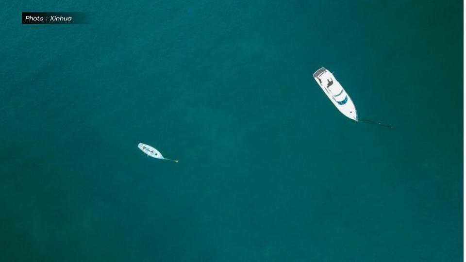 ครั้งแรก! ออสเตรเลียพบ 'ปลาหมึกบิ๊กฟิน' สัตว์ใต้ทะเลหายาก