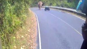 ระทึก! หนุ่มบิ๊กไบค์กับแฟนสาว เผชิญหน้ากับช้างป่า ทางไปเขาใหญ่
