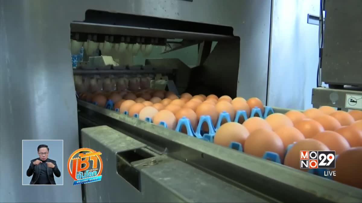 เบลเยียม-เนเธอร์แลนด์ตรวจสอบปัญหาไข่ปนเปื้อน