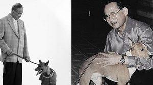 ความประทับใจของนิสิตสัตวแพทย์ ถึงรัชกาลที่ ๙ และสุนัขทรงเลี้ยง
