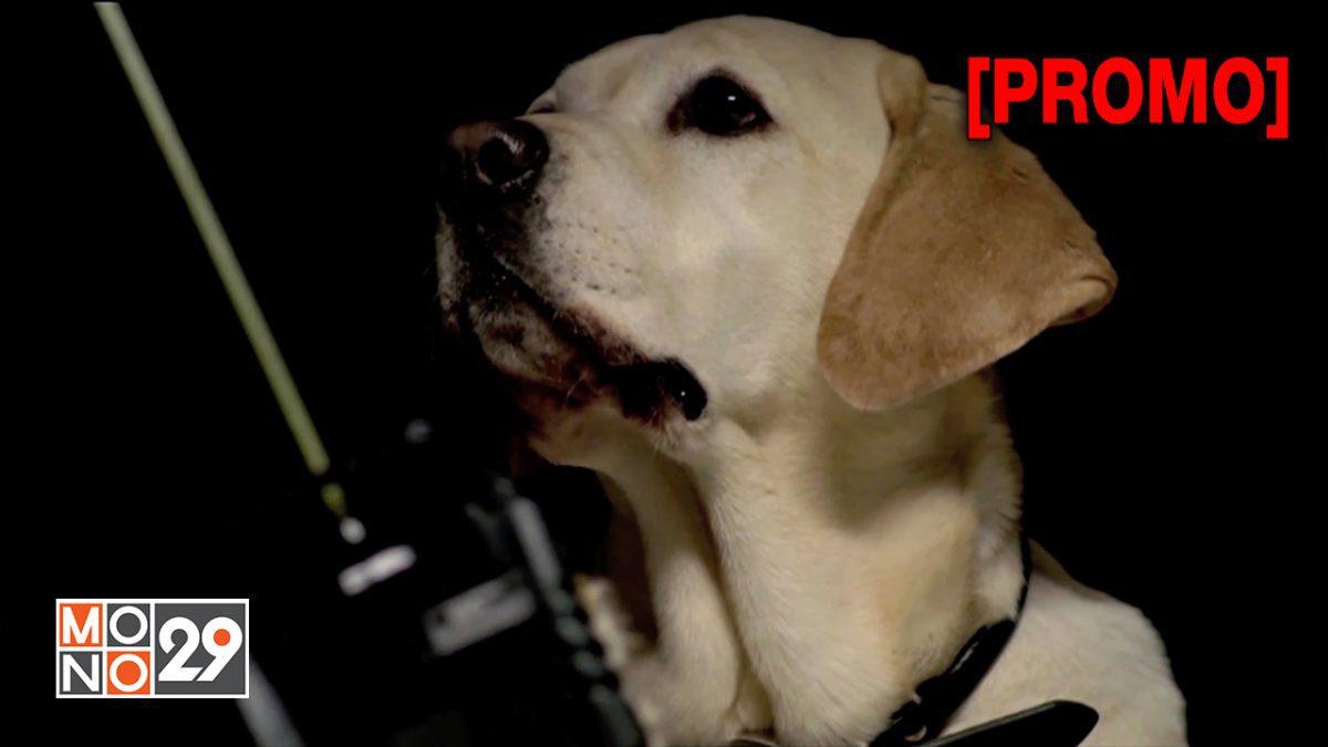 The Dog Who Saved The Holiday บิ๊กโฮ่ง ซูเปอร์หมาป่วนฮอลิเดย์ [PROMO]