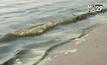 ตรวจสอบน้ำทะเลบางแสนมีสีเขียว