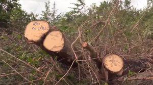 ย้ายตำรวจ จับชาวบ้านตัดต้นไม้ช่วยเหตุพายุ