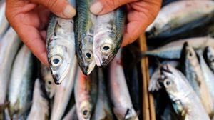 ปัญหากลิ่น คาวปลา จะหมดไป ถ้าทำตามขั้นตอนดังนี้ !