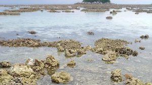 ดร.ธรณ์ วอนทุกฝ่ายช่วยกัน หลังปะการังหลีเป๊ะ สภาพพังยับเบิน