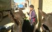 ชนเผ่าในโบลิเวีย ดื่มนมลาหวังรักษาโรคทางเดินหายใจ