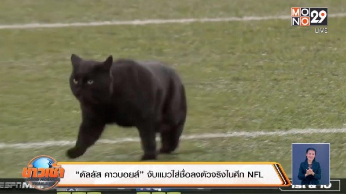 """""""ดัลลัส คาวบอยส์"""" จับแมวใส่ชื่อลงตัวจริงในศึก NFL"""