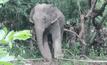 ยิงยาซึมช้าง 3 ตัวย้ายสู่ป่า