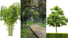 58 ไม้ยืนต้น ปลูกต้นไม้ ให้เป็นเงินใช้เป็นสินทรัพย์ค้ำประกัน มีหลักเกณฑ์อะไรบ้าง