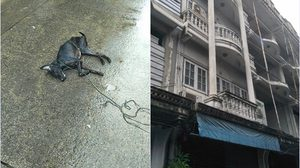 คนใจร้าย! โยนหมาแมวลงมาจากตึกกลางตลาดศรีย่าน