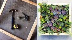 วิธี แต่งสวนแนวตั้ง จัดพืชอวบน้ำในกรอบรูป ทำง่ายสวยง่ายไม่กินที่