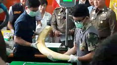 3 สัปดาห์รู้ผล ตรวจสอบงาช้าง 'เปรมชัย กรรณสูต'