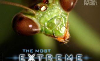 The Most Extreme Series สุดขีด! สัตว์พิศวง ปี 2