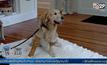 สุนัขช่วยเหลือช่วยชีวิตหญิงตาบอด