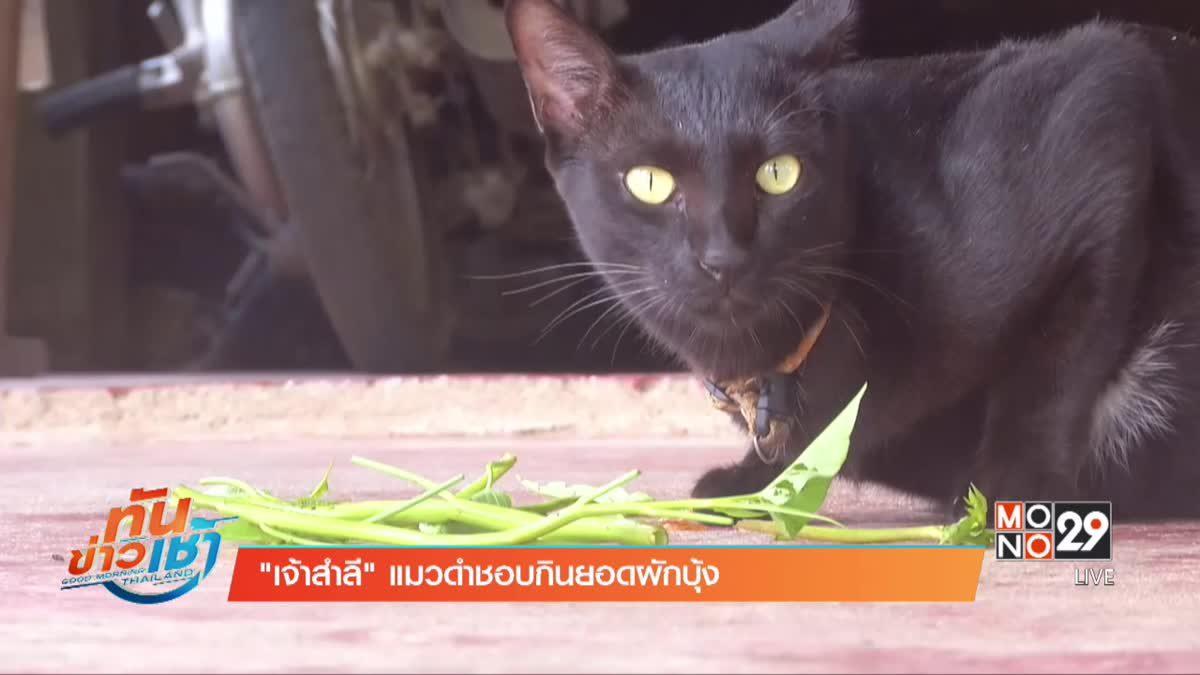 """""""เจ้าสำลี"""" แมวดำชอบกินยอดผักบุ้ง"""