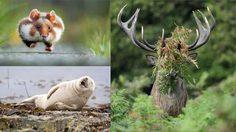 ภาพถ่าย สัตว์ในธรรมชาติที่สุดฮาที่สุดในโลก 2015 น่ารักจริงเชียว