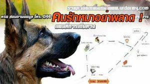คนรักหมาต้องไม่พลาด! ทัพบกชวนประมูลสุนัขปลดประจำการ