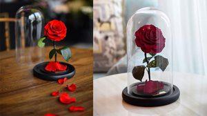 ดอกกุหลาบ อมตะ จาก Beauty and the Beast  มีอยู่จริง ไม่ต้องรดน้ำ ไม่ต้องการแสงแดด! ทำได้ไงอ่ะ