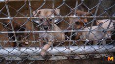 เปิดชีวิตเจ้าตูบจากหมาข้างถนน สู่บ้านหลังใหม่ที่ศูนย์พักพิงอุทัยธานี
