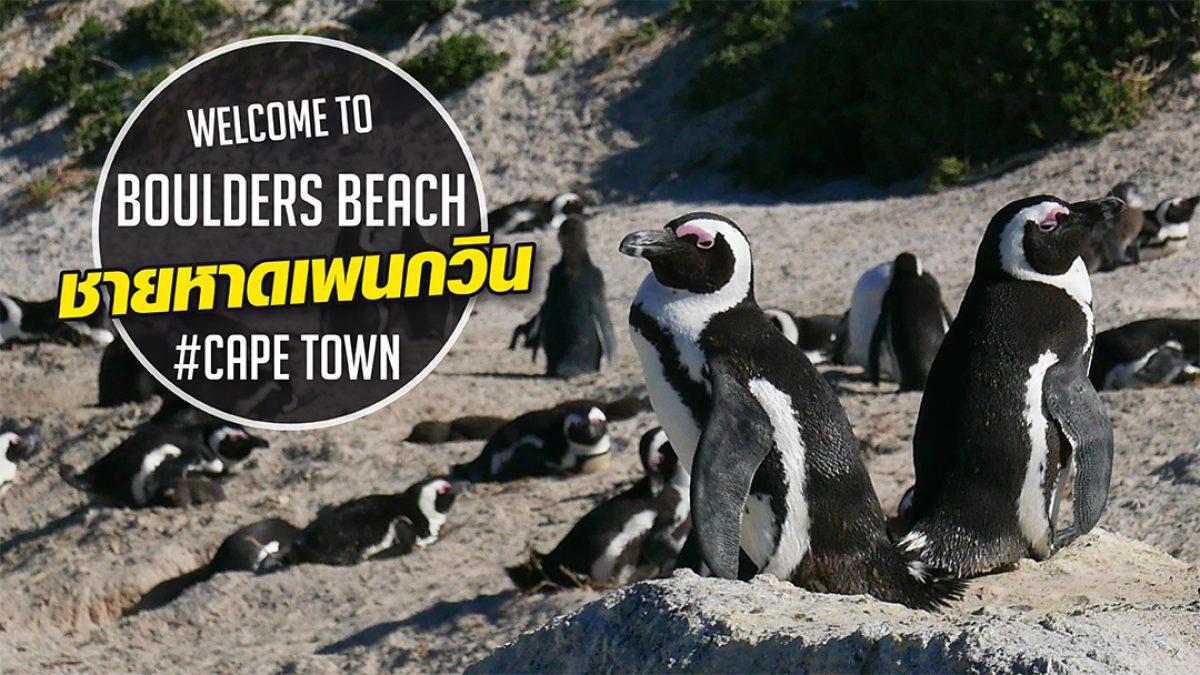 นกแพนกวินแอฟริกัน กับท่าเดินน่ารักจนอยากลงไปอุ้ม!!!